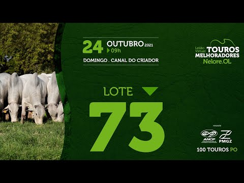 LOTE 73 - LEILÃO VIRTUAL DE TOUROS MELHORADORES  - NELORE OL - PO 2021