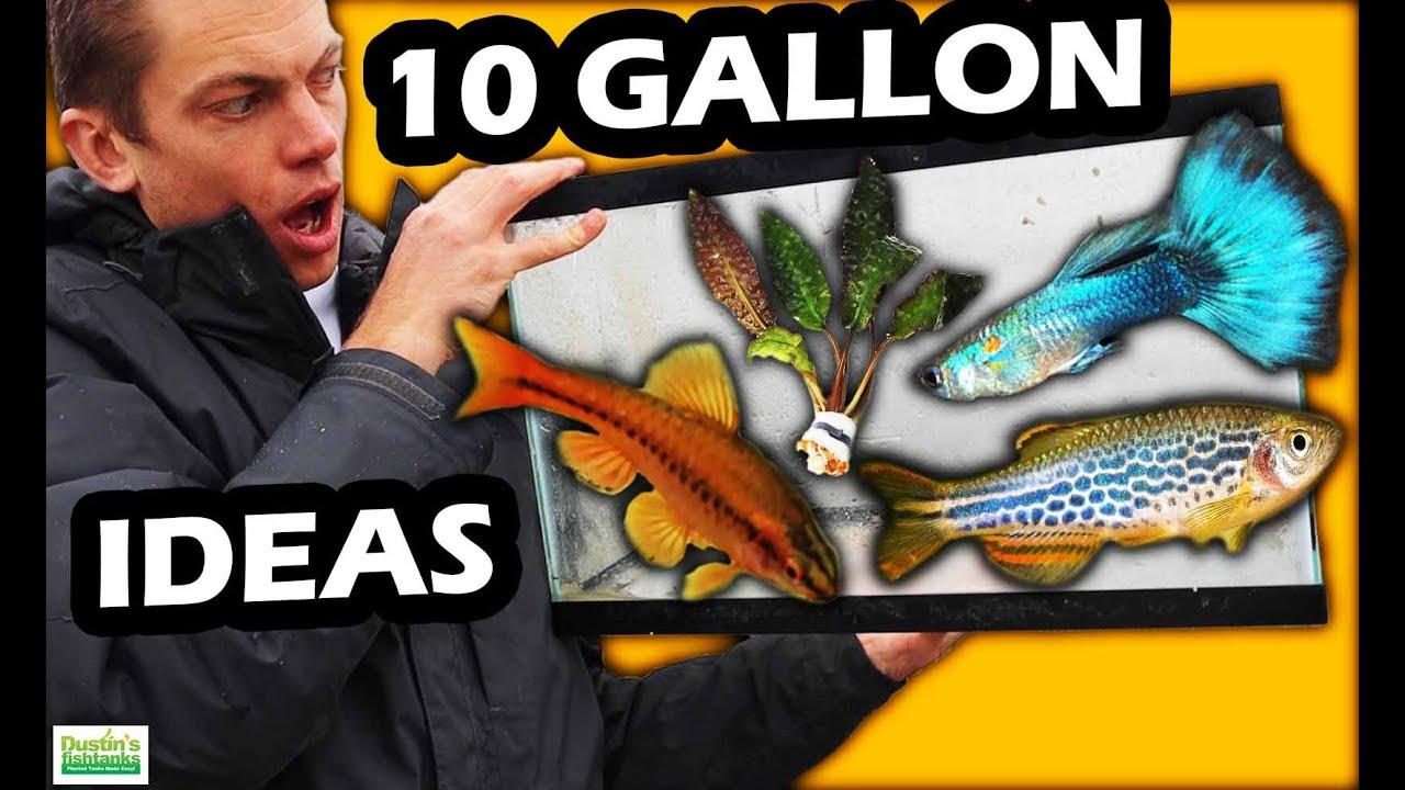Download TOP 5 AQUARIUM FISH: How To Setup A 10 Gallon Aquarium
