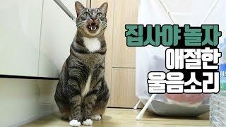 놀아달라고 애절하게 말하는 고양이 울음소리 cat crying talking