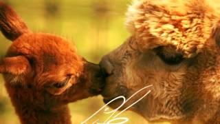 Zakochane zwierzęta! ! ANIMALS IN LOVE!!!