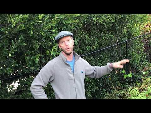 Best Organic Herbicide on the Market | Enviroscape LA
