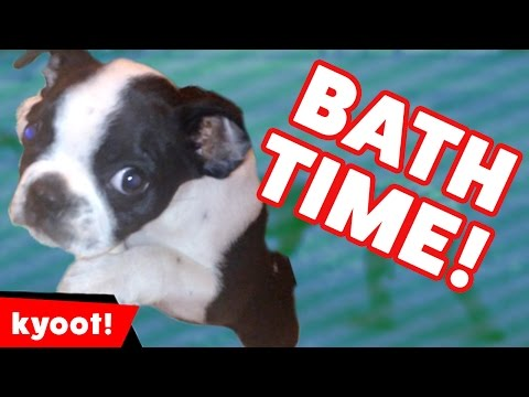 Dogs & Cats Hate Taking Baths Funniest Moments of 2016 Weekly Compilation | Kyoot Animals