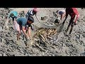 Catfish Catching in Mud Water By Hand | Amazing Fish Fishing lots of Fishes