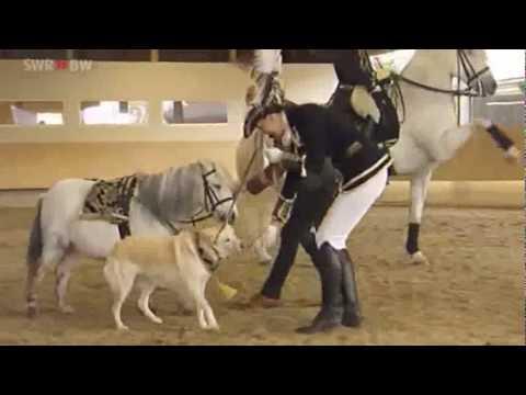 pony und pferd