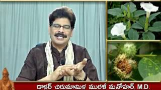 Ummetta (Datura) - Traditional Ayurvedic Remedies in Telugu by Dr. Murali Manohar Chirumamilla, M.D.