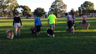 Dog Training, Obedience Drills