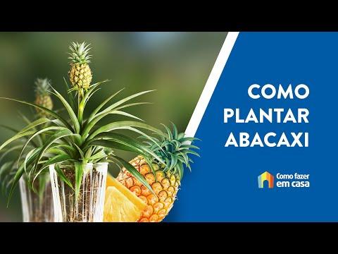 Como Plantar Abacaxi em Casa [TODAS AS DICAS]