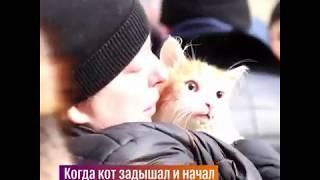 Волгоградские спасатели помогли коту, которого обнаружили во время пожара в Волгограде