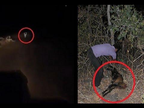 Ghost found in Moodabidri forest near Mangalore, Karnataka (720P HD)