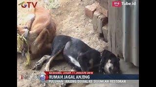Anggota FPI Bersama Warga Gerebek Lokasi Penjagalan Anjing di Bandung - BIM 11/01