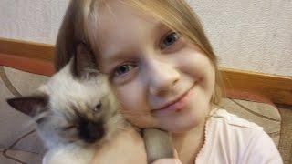 Как уговорить родителей завести котенка☆приколы с котами☆коты☆котята☆уход за котенком☆Полиша и Боня