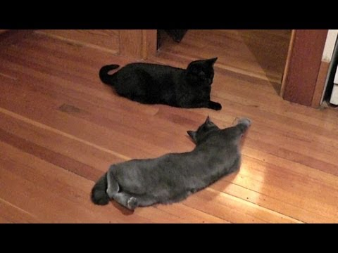 Epic Cat Play Fight