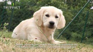 Comment réussir les premiers apprentissages du chien ? - Jardinerie Truffaut TV