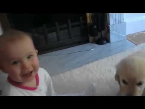 ℱunny ℬaby 𝒶nd 𝒟ogs - 𝒻unny 𝒷aby 𝓂oments