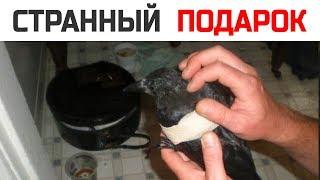Вороны отблагодарили мужчину за то, что он кормил их 4 года. Вот, как они это сделали