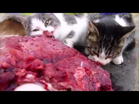 Brutal death metal cats
