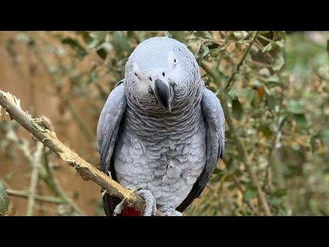 5-foul-mouthed-parrots-moved-after-SWEARING-in-front-of-zoo-visitors