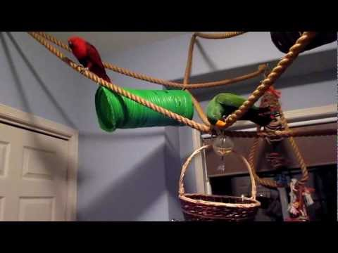 parrot foraging toys
