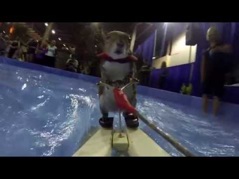 Twiggy The Water Skiing Squirrel!