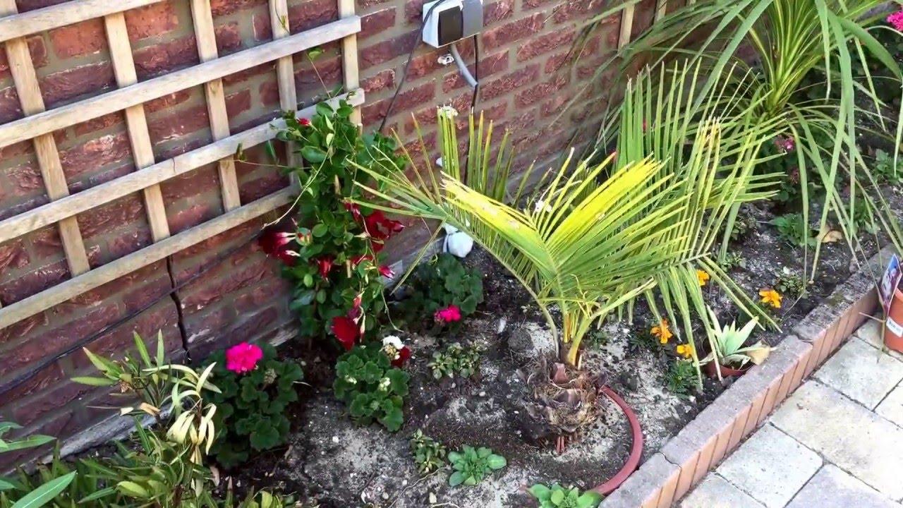 Hardy Tropical Mediterranean Garden In The Netherlands Youtube