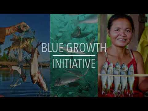 FAO Policy Series: Blue Growth Initiative