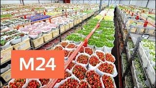 рижский рынок цветов в Москве