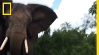 Watch: Elephant Attack From a Survivor's POV