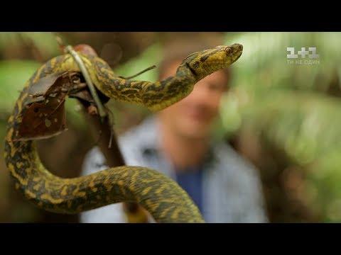 Секрет долголетия японцев и охота на змею. Япония. Мир наизнанку - 10 серия, 9 сезон