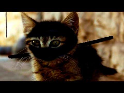Ninja Cats - Funny Cats Compilation - Funny Ninja Cats 2016