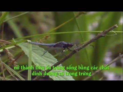 Xem phim về sinh trưởng và phát triển ở động vật
