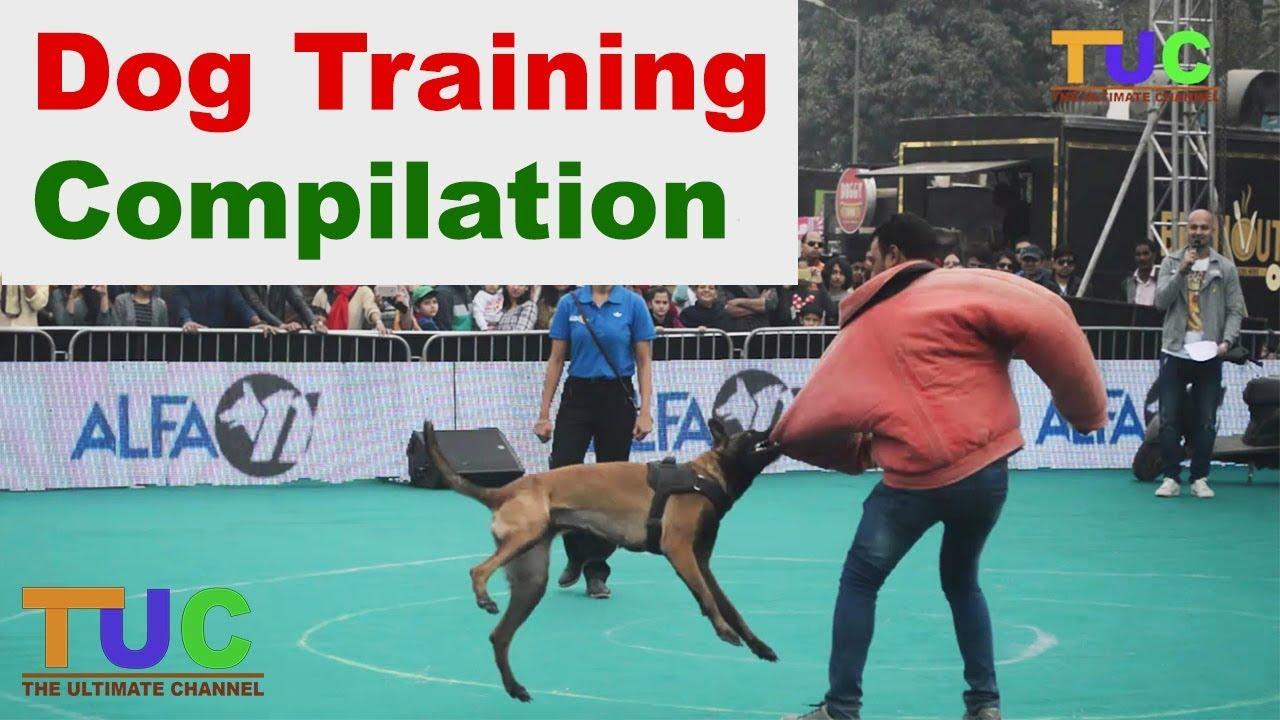 How To Groom A Dog • Samoyed, Golden Retriever, Labrador - YouTube
