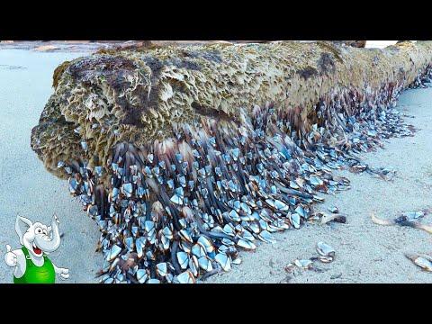10 Морских Существ, Которых Вы Никогда Раньше Не Видели