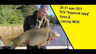 Ловля карпа РСК Борисов пруд 28 31 мая 2021 Сектор 39