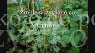 Nana Mouskouri - Quai des amours perdues/Polish