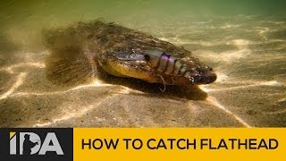 How To Catch Flathead - Mallacoota Esturay Fishing