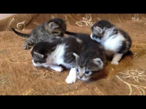 Как быстро растет котенок