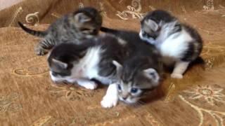 Котята растут