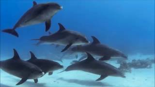 90-second Dolphin Way trailer