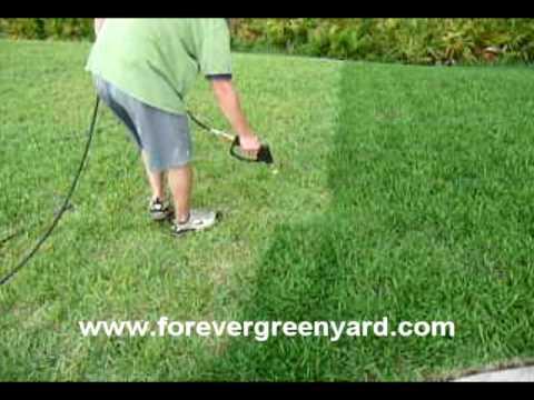 Jacksonville Lawn Painting Forever Green Gr