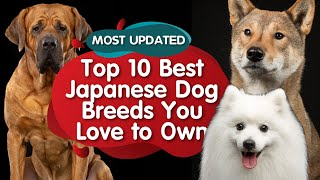 Top 10 Japanese Dog Breeds You Love to Own (MUST WATCH)