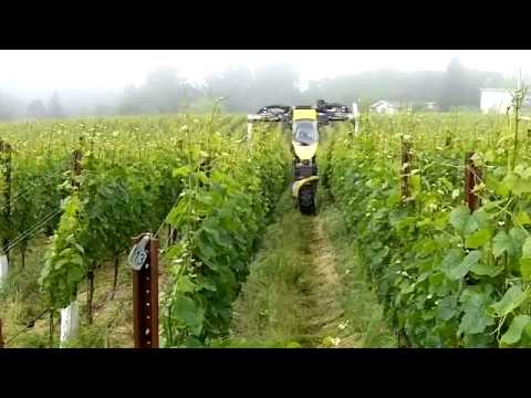 In the Vineyard - Organic Weed Control