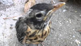 Daughter Worried with Bird