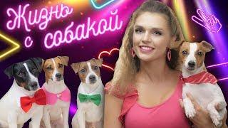 КЛИП НА 100.000 ПОДПИСЧИКОВ / Darina Sweet - ЖИЗНЬ С СОБАКОЙ🐶