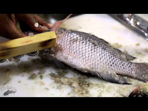 how to scale fish without a scaler