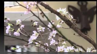 今陽子 - 恋の季節~ラテン・ヴァージョン~