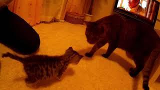 猫の教育に初挑戦のぶーにゃん。恐る恐る感が物凄い。 頑張って教育して...