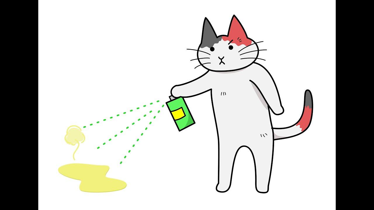 cat fluid in abdomen
