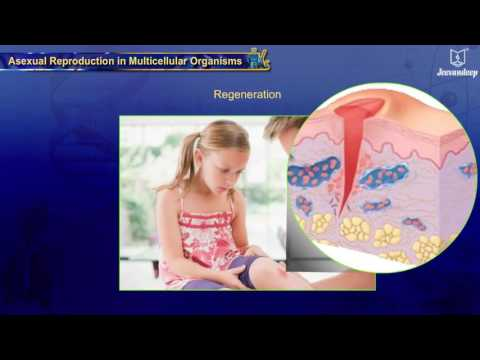 Asexual Reproduction in Multicellular Organisms | Reproduction | Science