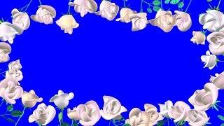 Футаж Белые Розы. Свадебные Рамки. Белые Розы на Хромакее. Свадебная Рамка из Роз