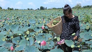 Lotus seeds season in my homeland   Lotus seeds dessert   Prepare by countryside life TV.